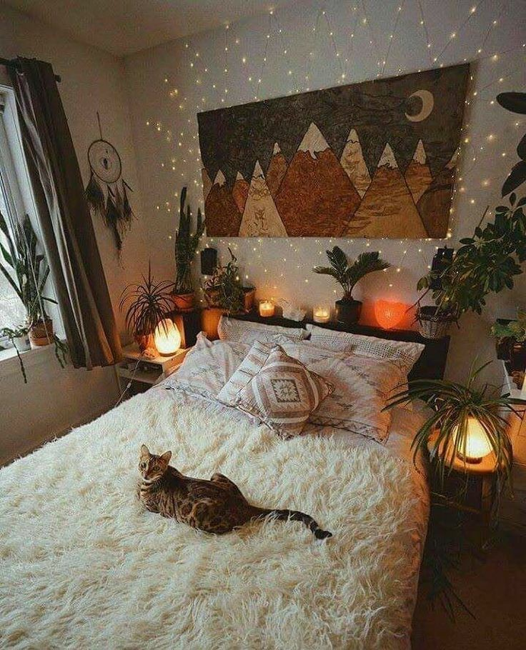 cat, bedroom, and room