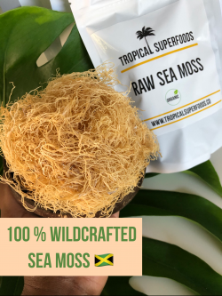 Wildcrafted Sea Moss from Jamaica