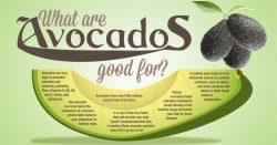 Avocados Are Amazing! ?