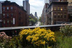 Summer NYC (2015)