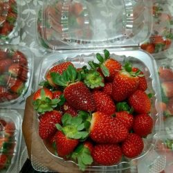 Fruitilious????