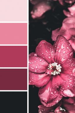 Muted Magenta Color Palette