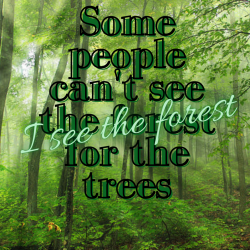 I See The Forest