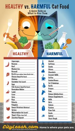 Healthy vs Harmful Cat Food