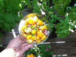 Fresh Tomato and Basil Flower Summer Salad