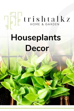Houseplants and Home Decor