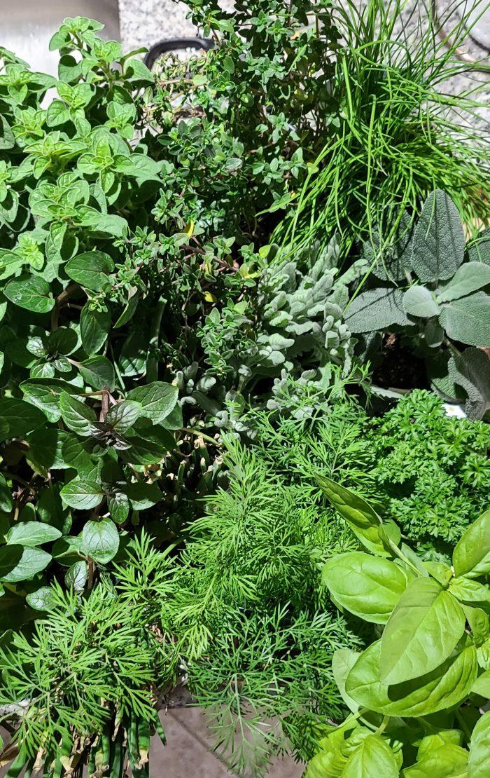 Kitchen counter Herb garden