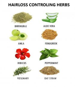 Hairloss Controlling Herbs