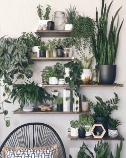 IG: hernameboo House plant Addict 