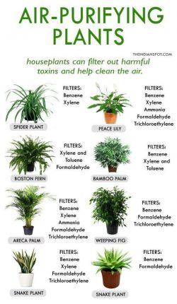 Plant Addict❤️🌱🌿