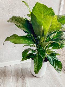 plant bae 🌱