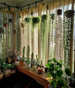 Plant Home Decor