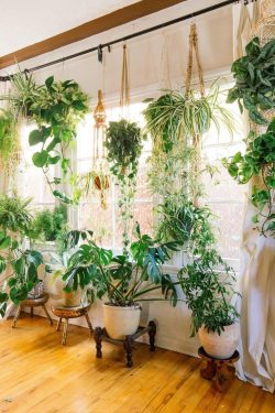 IG: hernameboo House plant Addict 🌿