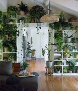 IG: hernameboo Plant life 