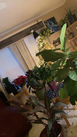 Plant junkiee