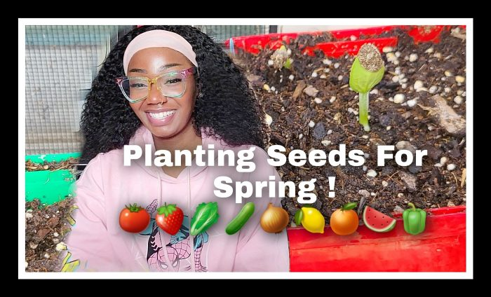 Beginner Gardening (Starting Seeds)