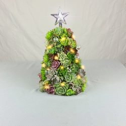 Succulent Christmas Tree 🎄