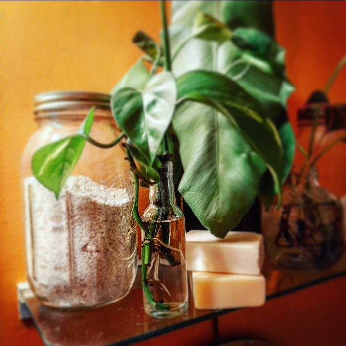 Propagating with airplane bottles