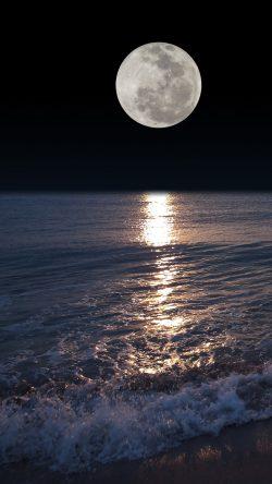 Night Moon 🌑