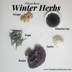 Must Have Winter Herbs!!!