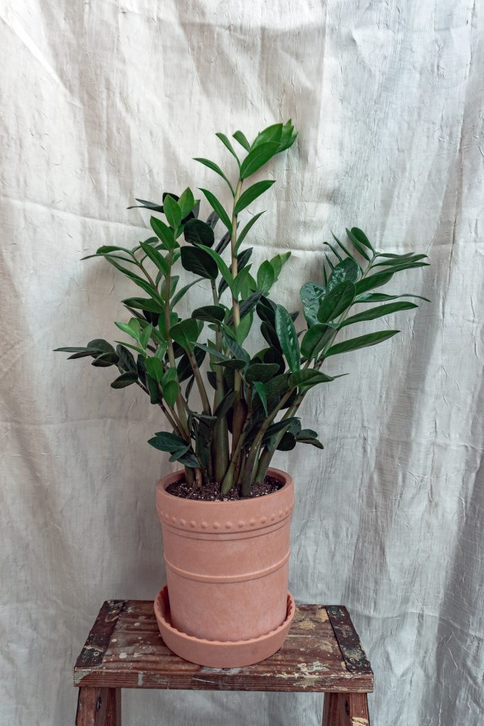 My Favorite Houseplants That Are Native to Africa