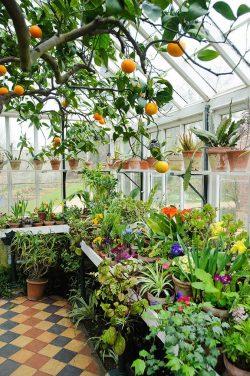 IG hernameboo Plant Love ❤️