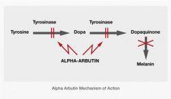 Alpha Arbutin