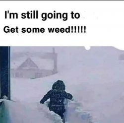 Weed is needed