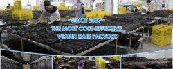 Wholesale 100 percent Human Hair Wigs on honesthairfactory.com